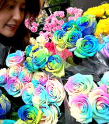 Rainbow Roses: Perfect gift for her picture