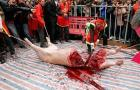 Live Pig Chopped into Halves in Rural Vietnam Festival (Graphic):