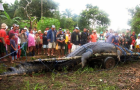 Monstrous Philippines Crocodile Gets Guinness Nod: