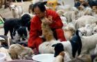 Chinese Dog Lover Adopts 140+ Strays: