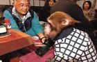 Restaraunt Uses Monkeys as Waiters: