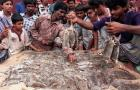 Rat-Killing Champion Crowned in Bangladesh:
