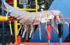 Giant Isopod Found Attached To Underwater Robot:
