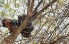 Woman Sleeps in Tree Bed 20 Feet Off The Ground: