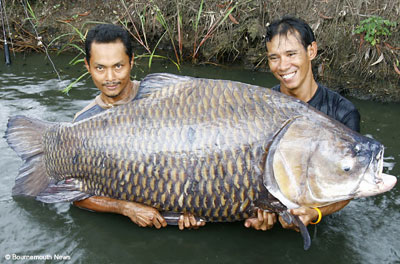 Worlds Largest 260 Pound Carp picture