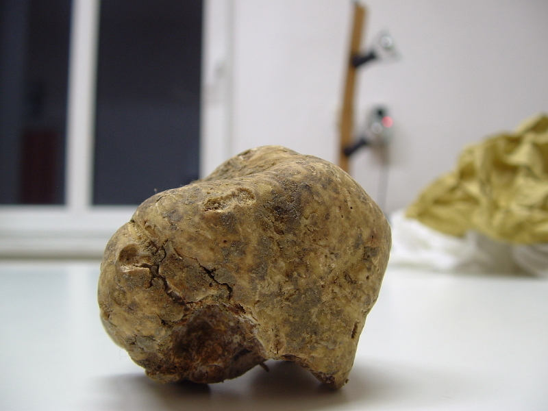 $210,000 White Truffle picture