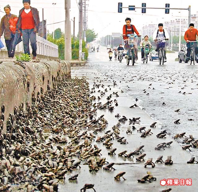 2008 frog swarm in China