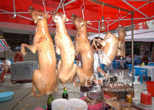 10 Ways to Eat Your Dog in China picture
