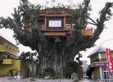 tree-house-japan Would You... Could You... In a Tree? picture