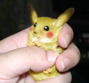 Real Life Pikachus Auctioned for $925 Million picture