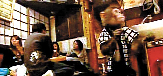 japan-monkey-waiter02 Restaraunt Uses Monkeys as Waiters picture