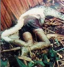 Grown Woman Eaten by Python [Very Graphic] picture