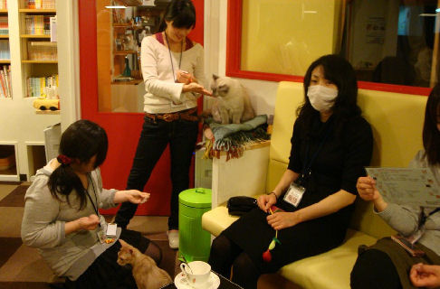Tokyo's Cat Cafes: The New Cat's Meow! picture