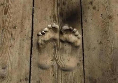 Footprints in Wood Tell Story of Buddhist Monks Prayers picture