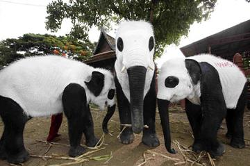 Panda Painted Elephants Grab Attention picture