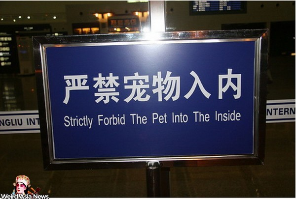 the-pet-into-the-inside