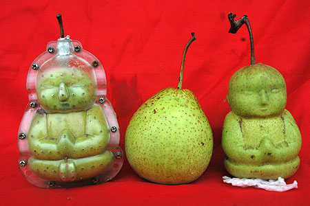 BuddhaPear Chinese Farmer Breeds Divine Looking Pear picture
