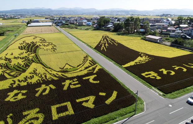 rice art05 Japanese Rice Farmers Create Giant Paddy Art picture
