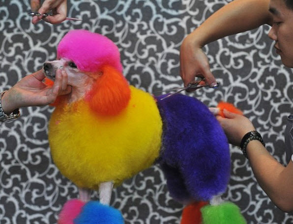 Chinese Dogs Get a Colorful Makeover