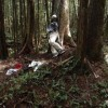 Aokigahara (aka Suicide Forest) picture