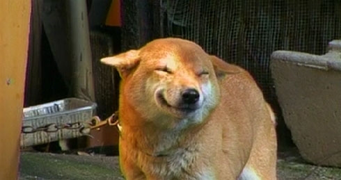 Japanese Dog Reserves Smile for Its Owner picture