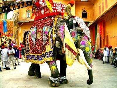 Horned Up Elephant Stampedes Through Hindu Wedding picture
