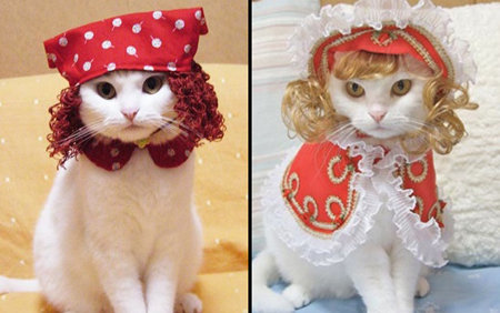 Japanese Cat Costumes: The New Cat's Meow picture