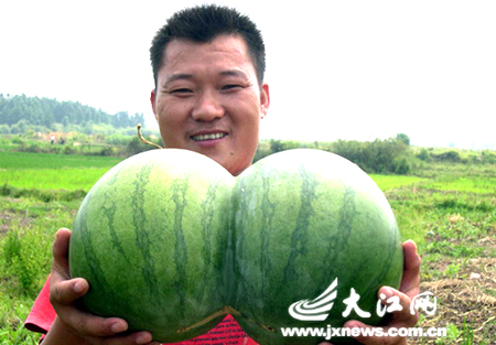 Freaky Conjoined Watermelon and Other Weird Fruit Mutations picture