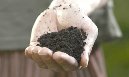 Eating Soil: Holy, Nourishing or Just Plain Dirty? picture