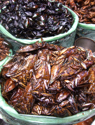 fried cockroaches1 Some Truly Disgusting Dishes picture
