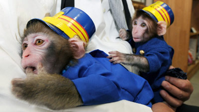 monkey station masters pa Two Monkeys Appointed StationMasters in Japan picture