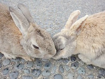 Poison Gas Production Site: A Haven for Rabbits picture