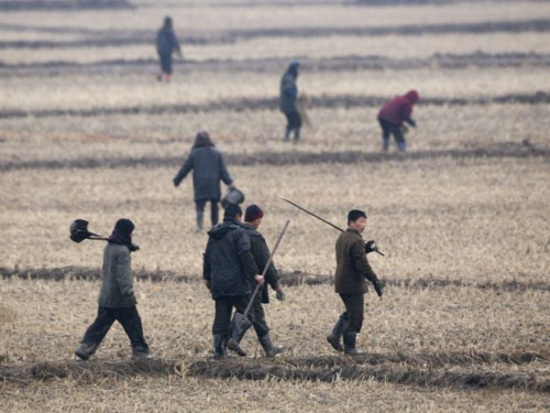 For North Koreans, Human Excrement a Top Seller picture