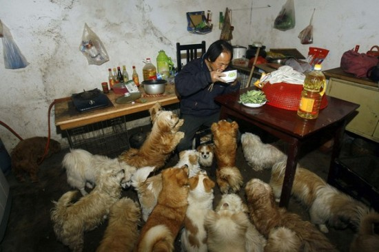 Chinese Dog Lover Adopts 140+ Strays picture