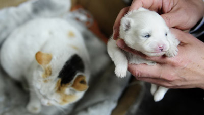 Impossible News: China Cat Gives Birth To Puppy picture