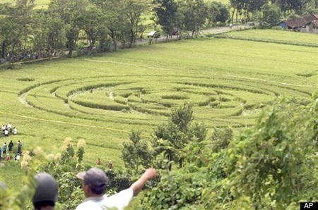Circle2 Indonesian Crop Circles: Was A UFO Responsible? picture