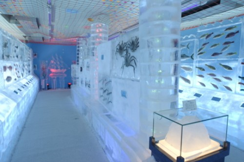 Japanese Ice Aquarium Offers Cool Alternative to Normal Aquariums picture