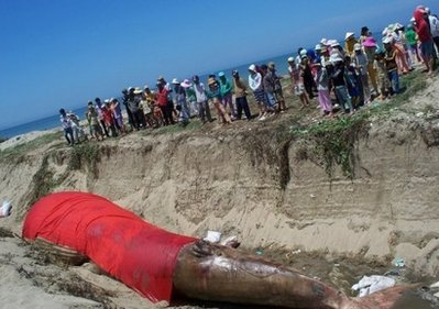 Dead Whale Given Burial Ceremony in Vietnam picture