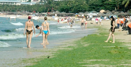 Green Algae Invades Beach Along China Sea picture