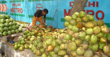 coconuts e1312708922808 Indian Man Breaks Limca Record for Cracking Coconuts picture