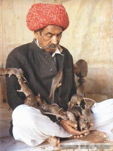 rats 2 India's Rat Temple: A True Test of Faith picture