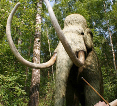 Scientists to Try Cloning the Woolly Mammoth picture