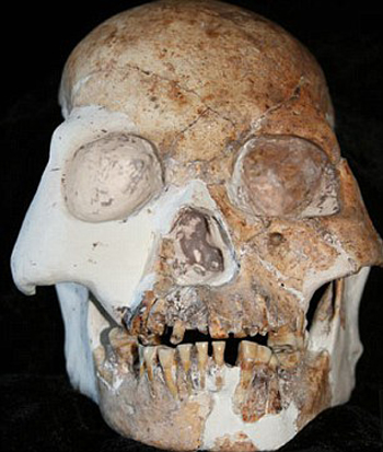 skull1 Skulls from China's Red Deer Cave: New Humanoid Species? picture