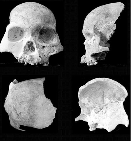skulls2 Skulls from China's Red Deer Cave: New Humanoid Species? picture