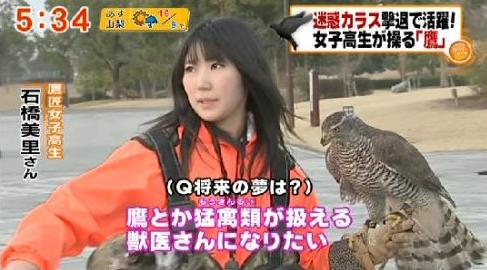 schoolgirl falconer Teen Falconer Fights Crows in Japan picture