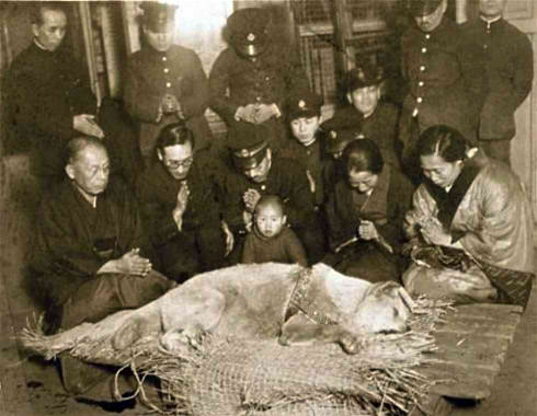 Museum Displays Last Photo of Hachikō, Japans Most Beloved Dog  picture