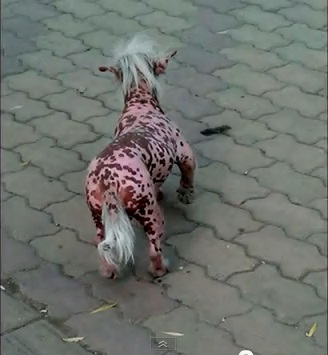 Strange Pink Beast Causes a Stir in China picture