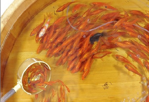 Japanese Painter Brings Goldfish to Life picture