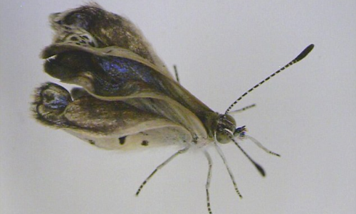 Scientists Report Mutant Butterflies from Fukushima Exposure picture