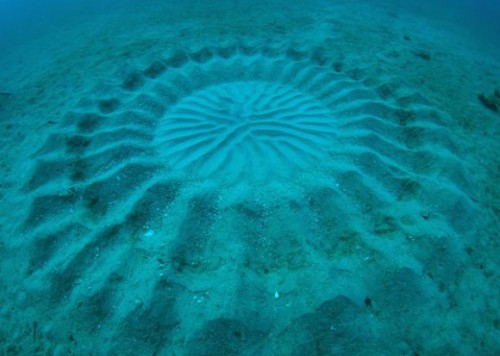 Natural Wonder: Mysterious Underwater Circle Used for Mating